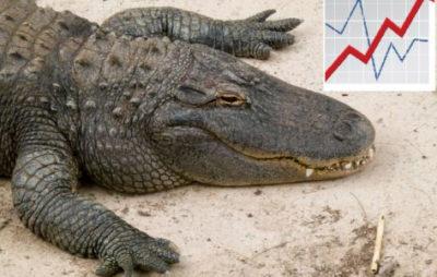 как использовать систему аллигатор
